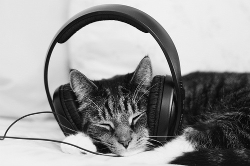 Classical music news: Do pets respond to music? Yes, but ...
