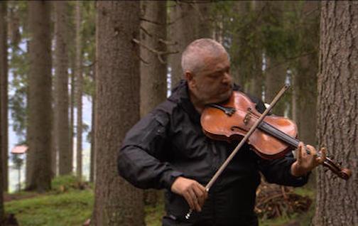 Serenading spruce trees