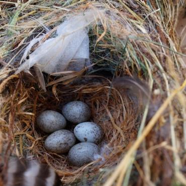 Lisa Frank Spring Birds eggs