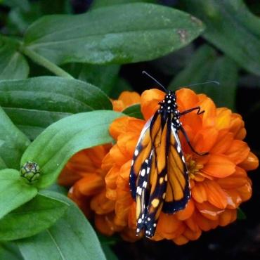 Lisa Frank Summer Butterfly
